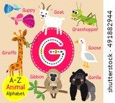 cute children zoo alphabet g... | Shutterstock .eps vector #491882944