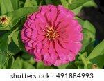flower in garden | Shutterstock . vector #491884993