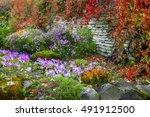 Flowerbed In Autumn Season....