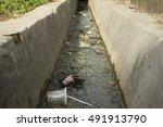 Dirty Irrigation Ditch...