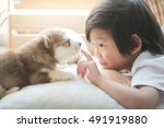 Stock photo cute asian child playing with siberian husky puppy 491919880