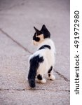 Small photo of Baby alley cat walking in a street