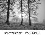 Three Trees In Line In The Fog