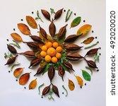 handmade mandala made of autumn ...   Shutterstock . vector #492020020