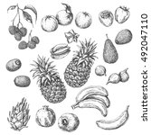 monochrome tropical fruits set. ... | Shutterstock .eps vector #492047110
