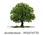 Tree On White Background Vecto...