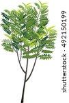 vector illustration shape tree...   Shutterstock .eps vector #492150199