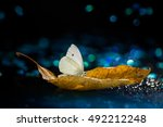 White Butterfly On Autumn Leaf...