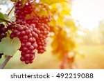 Detail View Of Vineyard With...