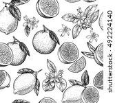 lemons and oranges. vector... | Shutterstock .eps vector #492224140