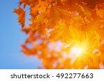 autumn leaves on the sun   Shutterstock . vector #492277663