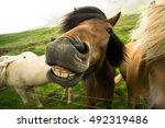 Horse Smiles  Iceland.