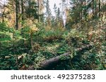 Small photo of Deep autumn forest with warm sunlight on green foliage. Wilderness thicket woods landscape with rich vegetation on tree trunk. Deep autumn forest. Moss cover log in forest woods. Thicket forest nature