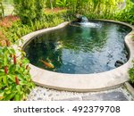 Fancy Carp Koi Fish In Pond In...