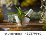 fresh medicinal  healing herbs... | Shutterstock . vector #492379960