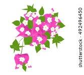 bougainvillea  flower isolated... | Shutterstock .eps vector #492496450