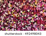 rose background.  colorful rose ... | Shutterstock . vector #492498043