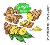 beautiful set of ginger. hand... | Shutterstock .eps vector #492522094