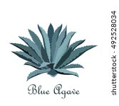 tequila blue agave. realistic... | Shutterstock .eps vector #492528034