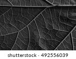 fresh leaf converted to black...   Shutterstock . vector #492556039