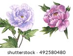 watercolor painting of pink and ... | Shutterstock . vector #492580480