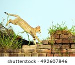 Stock photo cat jumping on wall 492607846