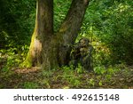 Small photo of Sniper soldier man in military ghillie suit camouflage with rifle in hands aiming target sitting in ambuscade near tree in forest