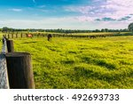 green pastures of horse farms....   Shutterstock . vector #492693733
