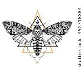 Detailed Dead Head Moth In...