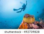 scuba diver exploring world war ...   Shutterstock . vector #492739828