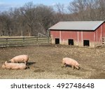 Three Pink Pigs In Pen At Oxon...