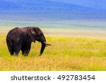 An Old Bull Elephant Serengeti...
