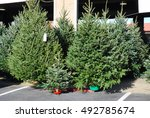 Christmas Trees In The Farmers...