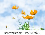 soft focus of colorful flower... | Shutterstock . vector #492837520