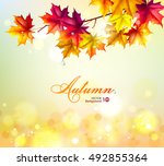 autumn background. leaves of... | Shutterstock .eps vector #492855364