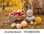 Wonderful Autumn Decor In Forest