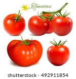 red ripe tomatoes. fully... | Shutterstock .eps vector #492911854