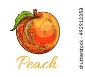fresh peach fruit sketch. ripe... | Shutterstock .eps vector #492912358
