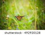 Butterfly On Grass Field