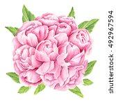 peony flower bouquet.... | Shutterstock . vector #492967594