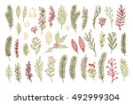 hand drawn vector vintage... | Shutterstock .eps vector #492999304