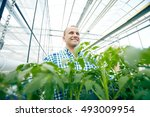 happy farmer among plants in... | Shutterstock . vector #493009954