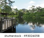 Small photo of wood walkway with protective fencing near an alligator area. There are a few alligators in the water.