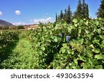 Small photo of Red bunch of grapes on a vine ready for picking. The vineyard in Nemea region, one from famous wine producing region in Greece
