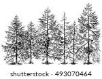 pine forest hand drawn border | Shutterstock .eps vector #493070464