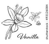 vanilla pods and flower... | Shutterstock .eps vector #493126084