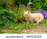 Stock photo funny kitten in the garden 49313329
