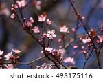 blossom fruit. beautiful spring | Shutterstock . vector #493175116