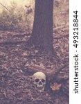 A Skull Sits On The Ground In...