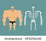 Human Structure. Skeleton Men....